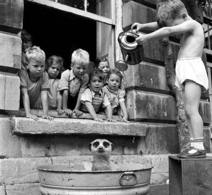 niños bañando un mapache