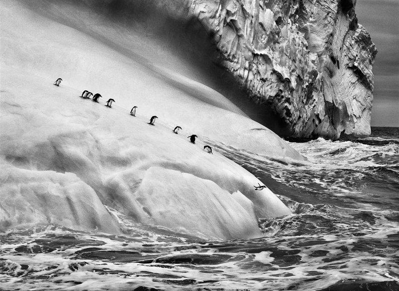 pinguinos sebastio salgado