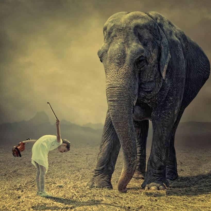 elefante y hombre dando gracias