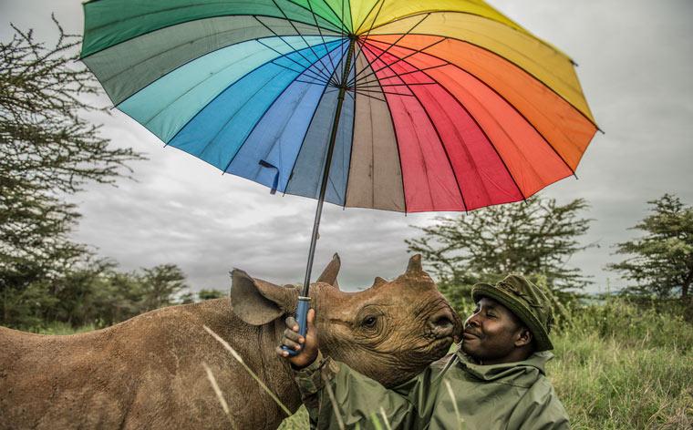 rinoceronte negro con negrito