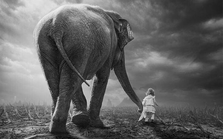 entrena a tu elefante bn