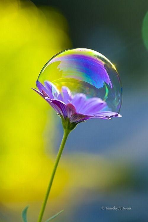 como en una burbuja