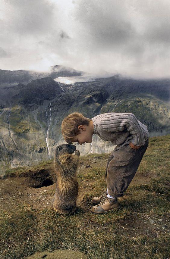 querida marmota